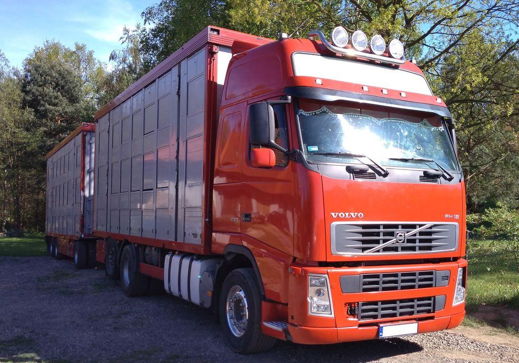 VOLVO FH12 480 hayvan nakil aracı + römork hayvan nakil aracı