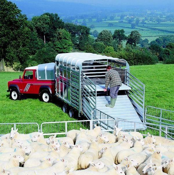 IFOR Williams TA510 römork hayvan nakil aracı